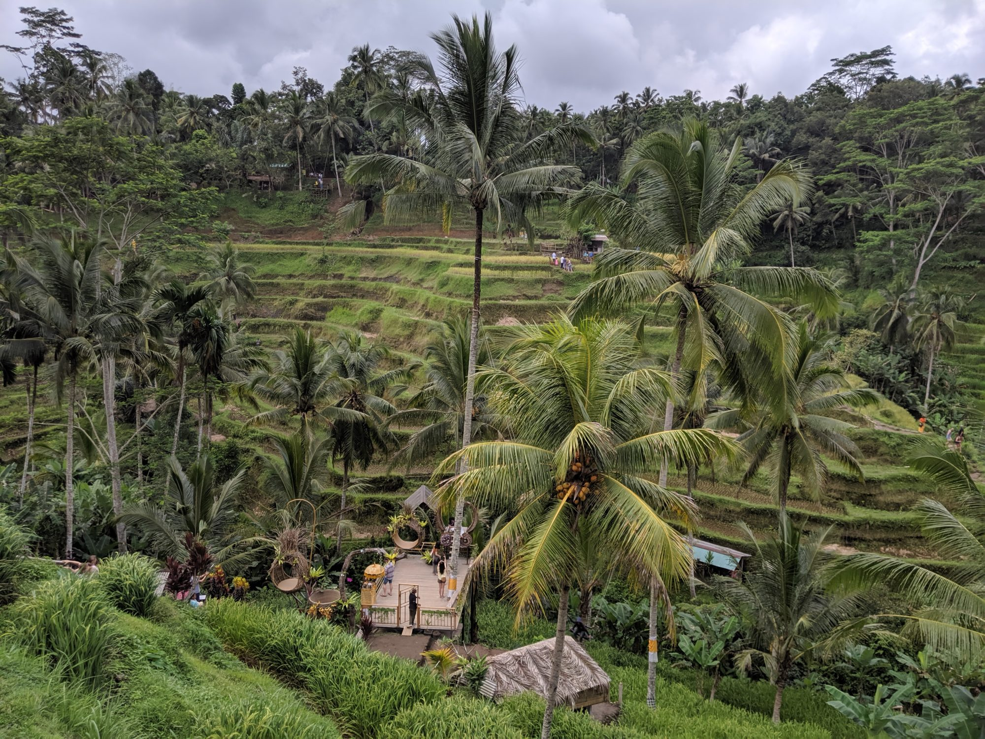 Rice Terrace in Tegallalang